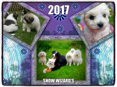 HappyYear2017 from Snow Wizard's!