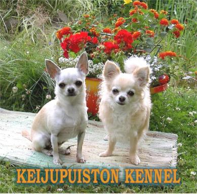 Keijupuiston kennel