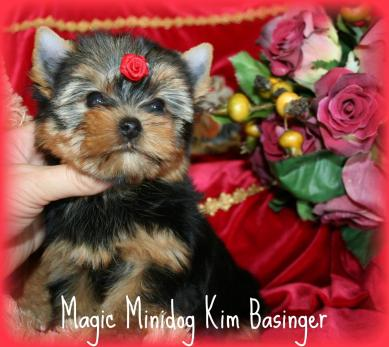 Magic Minidog Kim Basinger