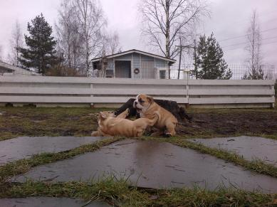 Mud wrestling in december